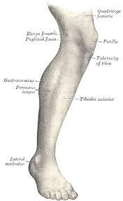 leg lab picior