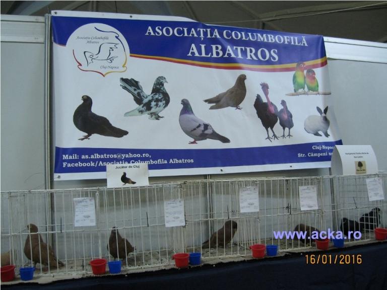 asociatia-albatros-cluj