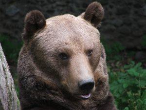medve - somostető