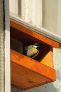 fotó: madarvedogolyokapkodo.blogspot.ro