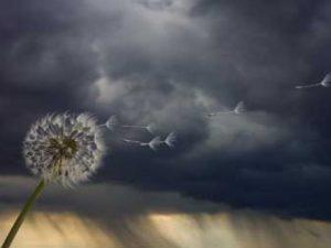 vihar_tavasz